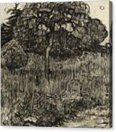 Weeping Tree Acrylic Print