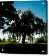 Weeping Willow Silhouette Acrylic Print