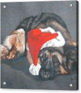 Weihnachtshund Acrylic Print