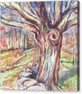 Weir Farm Oak Tree Acrylic Print