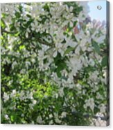 Welcome Spring 5 Acrylic Print