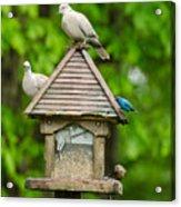 Welcome To My Bird Feeder Acrylic Print