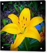 Welcoming Lily Acrylic Print