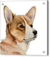 Welsh Corgi Dog Painting Acrylic Print