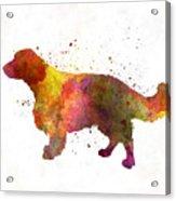 Welsh Springer Spaniel In Watercolor Acrylic Print