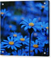 We're All Blue Acrylic Print