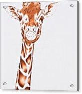 West African Giraffe Acrylic Print