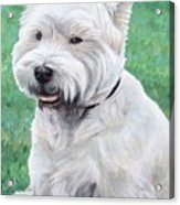 West Highland Terrier Acrylic Print