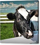 West Michigan Dairy Cow Acrylic Print