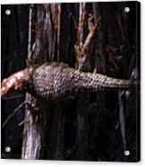 Western Fence Lizard Acrylic Print