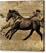 Western Flair Acrylic Print