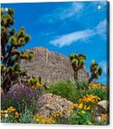 Western Grand Canyon Area Acrylic Print