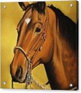 Western Horse Acrylic Print