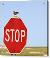Western Meadowlark Singing On Top Of A Stop Sign Acrylic Print