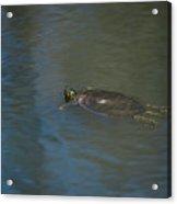 Western Painted Turtle Acrylic Print