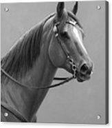 Western Quarter Horse Black And White Acrylic Print