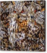 Western Siberian Eagle Owl Acrylic Print