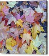 Wet Fall Leaves Acrylic Print