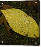 Wet Fallen Leaf Acrylic Print
