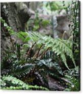 Wet Ferns Acrylic Print