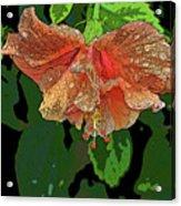 Wet Hibiscus Acrylic Print