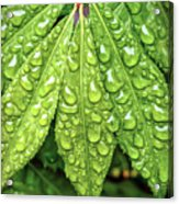 Wet Leaves Acrylic Print