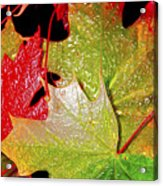 Wet Leaves Of Fall Acrylic Print