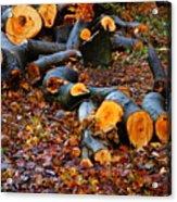 Wet Logs Acrylic Print