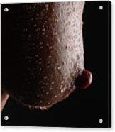 Wet Nip Acrylic Print