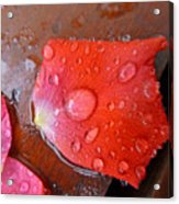Wet Petal 1 Acrylic Print