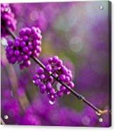 Wet Purple 2 Acrylic Print