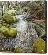 Wet Spot In Woods Acrylic Print