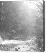 Wet Trail Acrylic Print