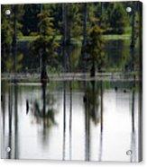 Wetland Acrylic Print