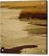 Wetland Stream Acrylic Print