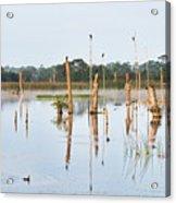 Wetlands At Sunrise Acrylic Print
