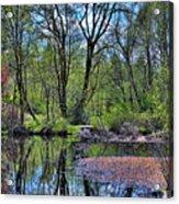 Wetlands Lake Acrylic Print
