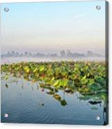 Wetlands Morning Mist  Acrylic Print