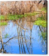Wetlands Viewing Area In Chatfield State Park Acrylic Print
