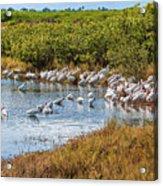 Wetlands Watering Hole Acrylic Print