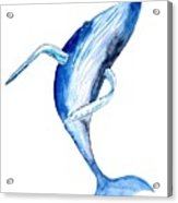 Whale 4 Acrylic Print