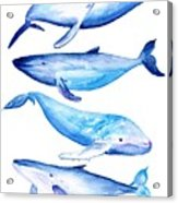 Whale Friends Acrylic Print