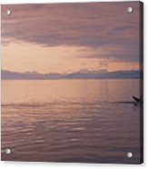 Whale Tail At Surface Acrylic Print