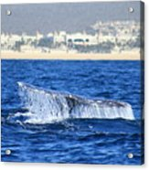 Whale Tail In Cabo Acrylic Print