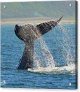 Whale Waterfall Acrylic Print