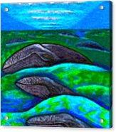 Whales In Glacier Bay  Alaska Acrylic Print by Al Goldfarb