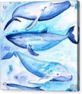 Whales Acrylic Print