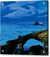 Whales Tales Acrylic Print