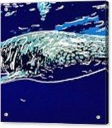 Whaleshark  Acrylic Print