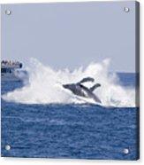 Whalewatcher Show Acrylic Print